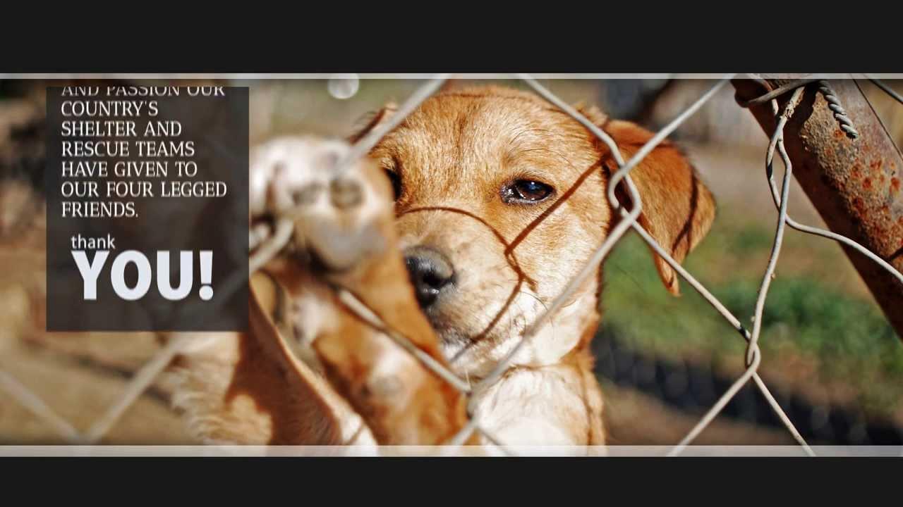National Dog Rescue