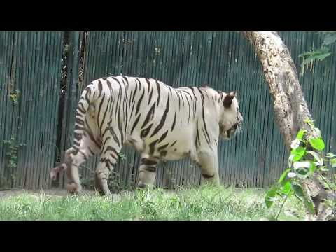 A brief tour of National Zoological Park Delhi, India