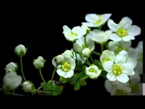 Flower Growing Nature Growing
