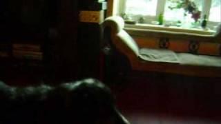 Sali, my Blue Merle Border Collie