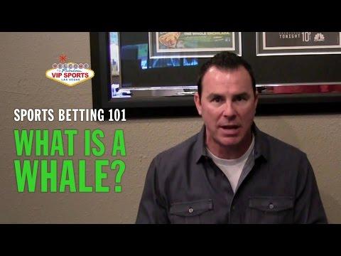 Steve stevens sports betting brisbane heat vs sydney thunder betting previews