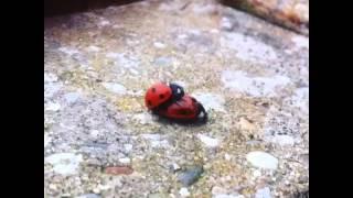 More snail porn
