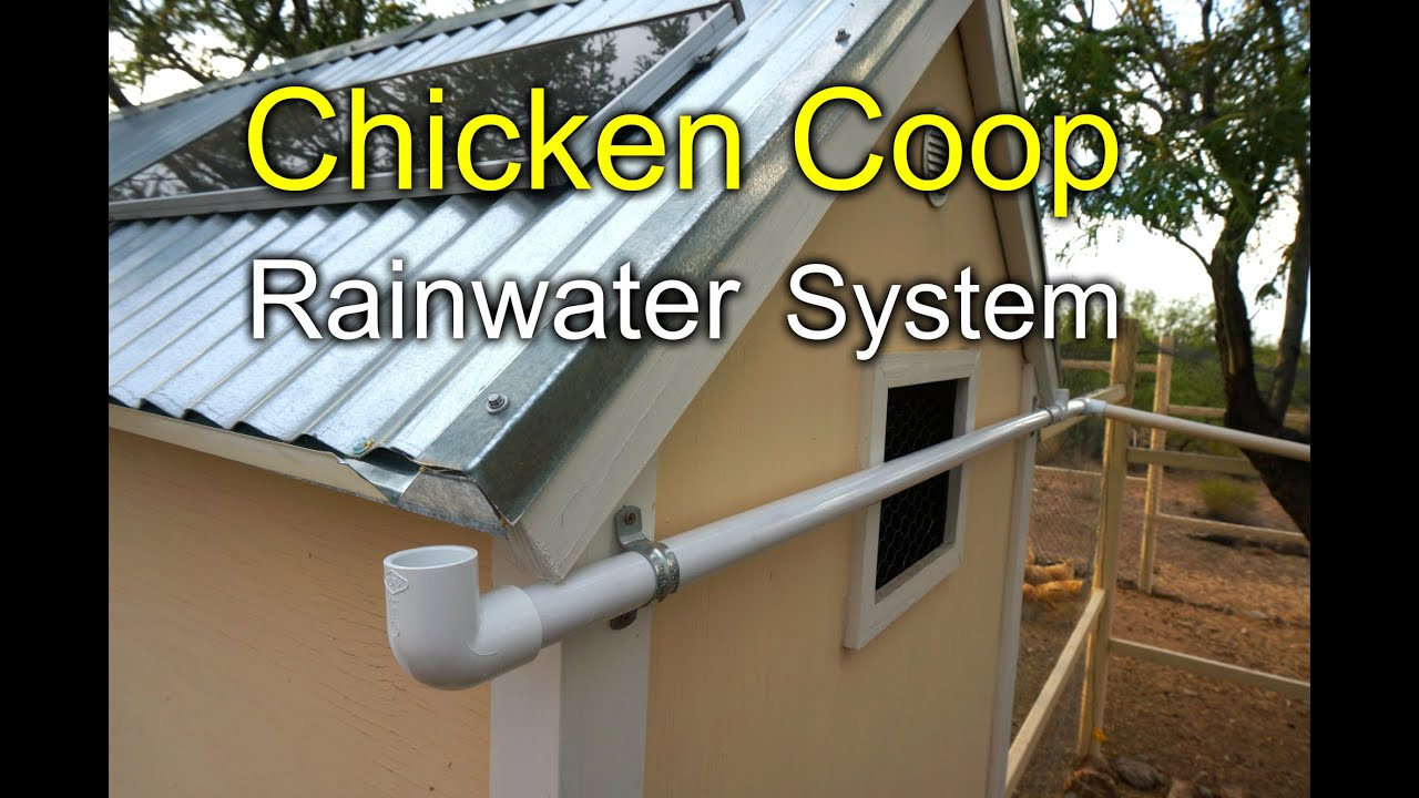 Chicken Coop Rainwater Harvesting System How To Youtube