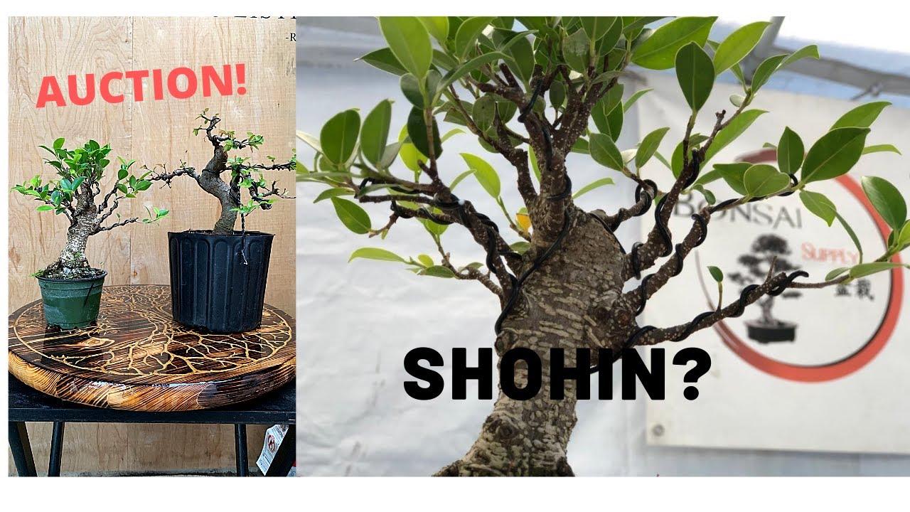 Shohin Bonsai Creation At The Bonsai Supply Auction 2 3 Youtube