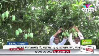 Mango farming success story of Raut family of Palghar