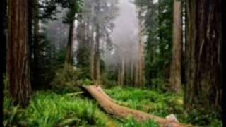 Play Sequoia