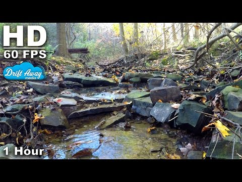 1 Hour Small Creek in the Forest HD Screensaver 60fps White Noise