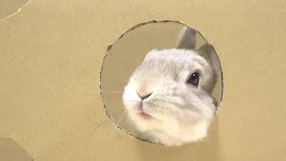 穴から顔だけ出してすばやくおやつをもらっていくウサギさん