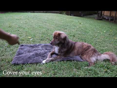 """Expert tricks with """"Do more with your dog"""""""