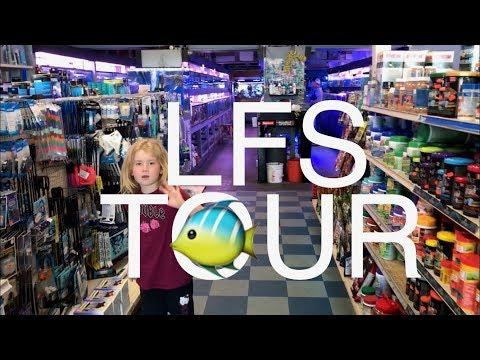 Fish Store Tour For The Second Time At TONGS!