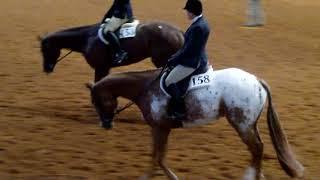 green htr under saddle 2017 worlds