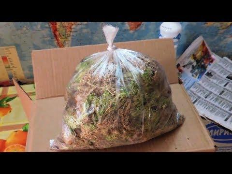 Упаковка клубней и корневищ для посадки при отправке почтой (plants By Mail).