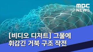 [비디오 디저트] 그물에 휘감긴 거북 구조 작전 (20…