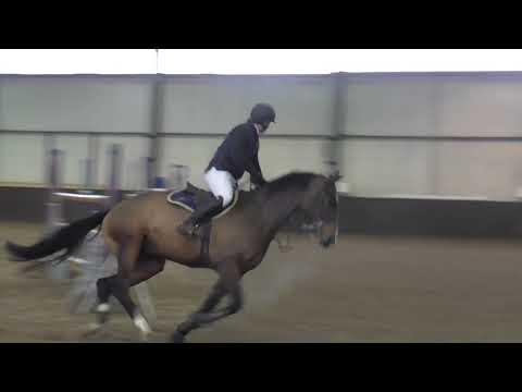David Coombs - Freddie 55 - 1.30m Solihull Riding Club