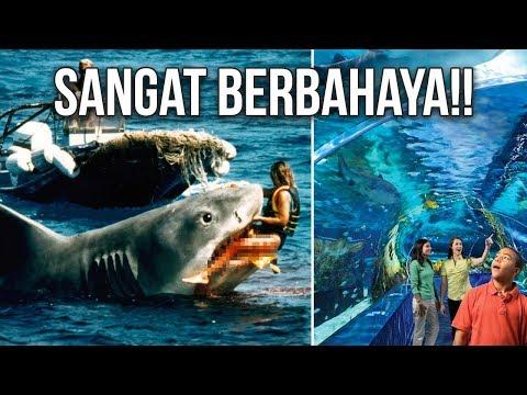5-alasan-kenapa-hiu-putih-tidak-pernah-ada-di-akuarium-wisata-dunia