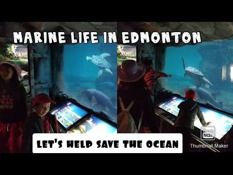 Marine Life in Edmonton