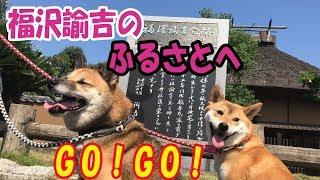 柴犬リキとリコが、大分県中津市にある一万円札でおなじみの福沢諭吉の...