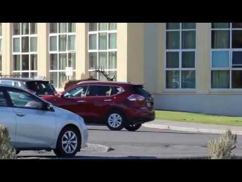 Elk attacks car in Yellowstone