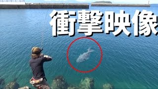 A huge red snapper caught from the levee 【japan fishing】