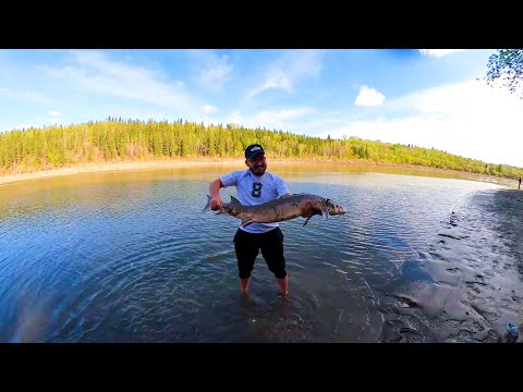 Edmonton NSR Fishing (49 Inch Sturgeon)