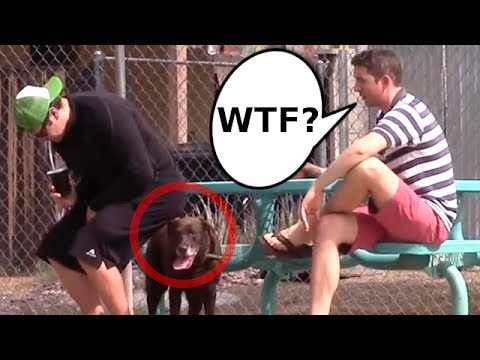 Thumbnail: Wet Fart Shart Prank (Featuring Sharting On Dogs)