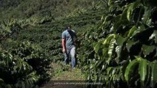 Cafés Especiais das Montanhas do Espirito Santo- Vídeo Sebrae ES