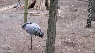 Zwierzęta w mini-zoo