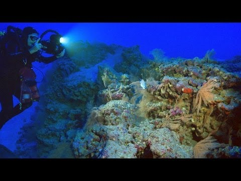 HIMB - Comparative Reef Research