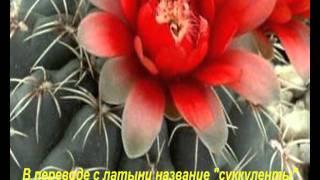 Презентация-Комнатные растения