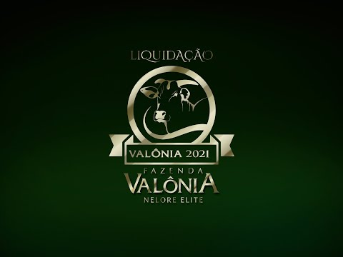 Lote 06   Dadiva FIV da Valônia   N 1075 Copy