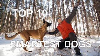 TOP 10 SMARTEST DOG BREEDS 2021