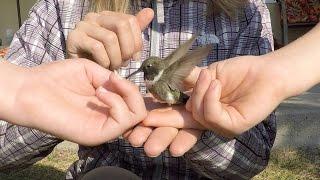 That was a hummer! Hummingbird banding and monitoring up close