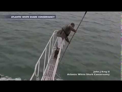 Гигантская белая акула