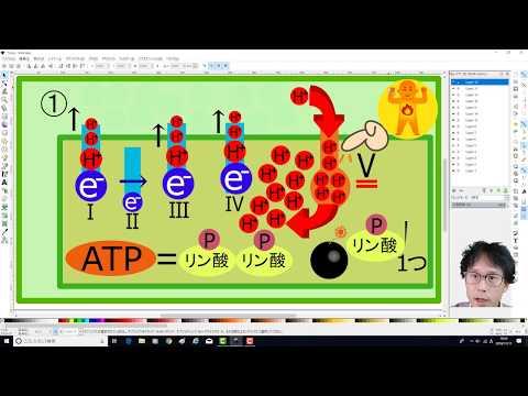第8回 集中講義ATPバンバン量産電子伝達系