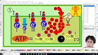 第8回 集中講義「ATPバンバン量産!電子伝達系」