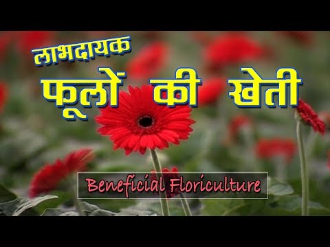 Floriculture Farming In India फ ल क उत तम ख त Floriculture Business Youtube