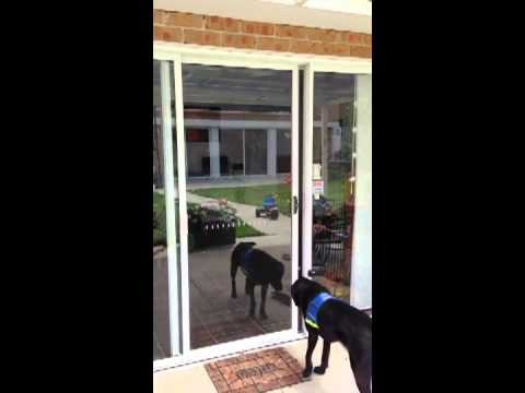 Autoslide Diy Automatic Door For Your Dog Youtube