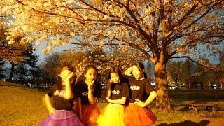夜桜の三郷公園で夢見娘さん達がマトリョーシカを踊ります。