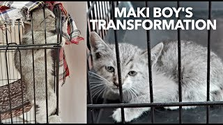 ✰SADDEST KITTEN Faith in Humanity Exists! MIND-BLOWING Transformation