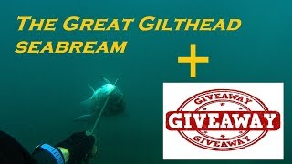 Spearfishing | The GREAT Gilthead SEABREAM + GIVEAWAY - H μεγάλη τσιπούρα + Κλήρωση ✅