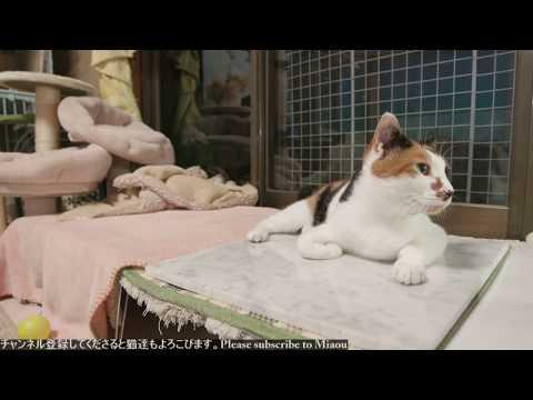 2018.8.7 猫日記   Cats & Kittens room 【Miaou みゃう】