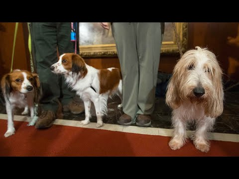 Pet Central - Meet the newest breeds coming to the Westminster Dog Show next month