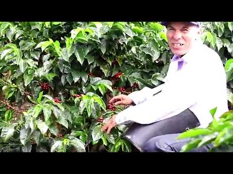 Este miércoles inicia la semana del café en el Tolima