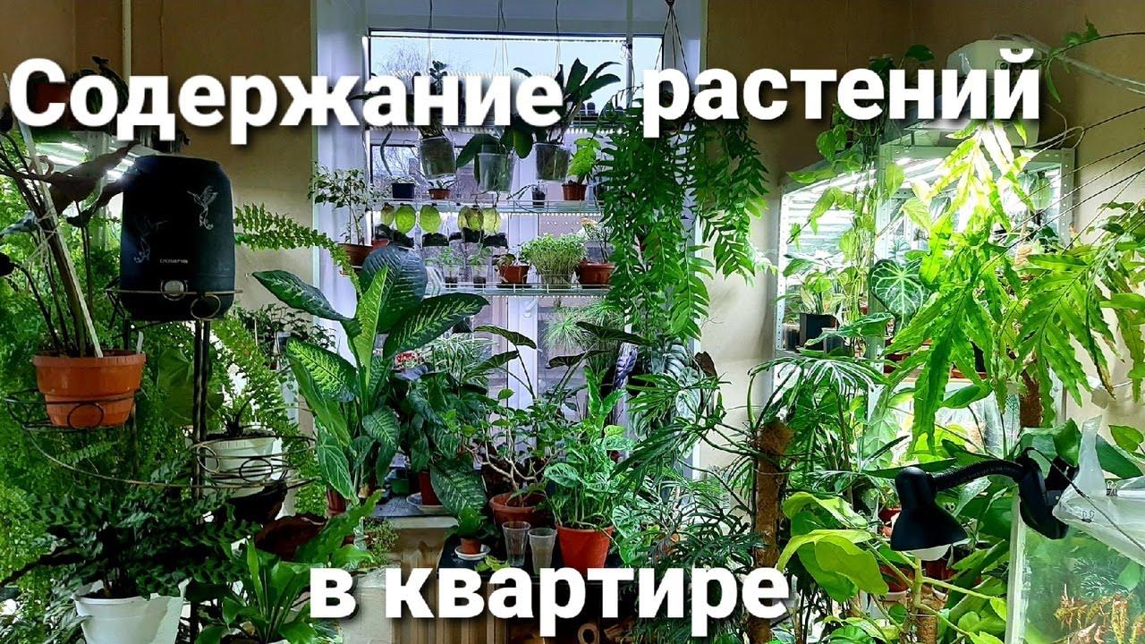 Содержание растений в квартире/Мой опыт