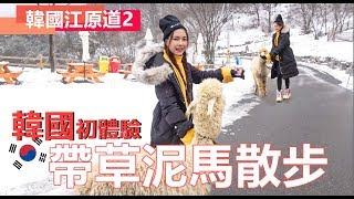 【VLOG #19】第一次带草泥马去散步!在韩国挑战吃蝉虫 恶心到爆!(下集)