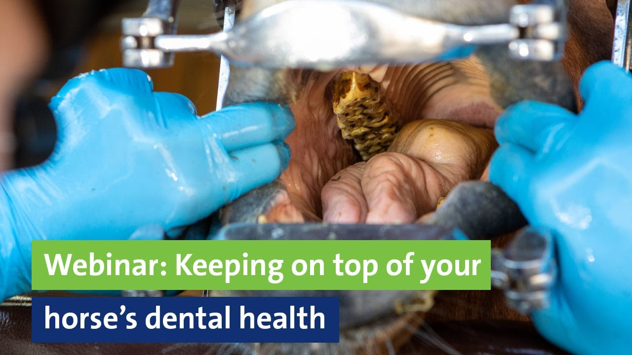 Webinar: Keeping on top of your horse's dental health