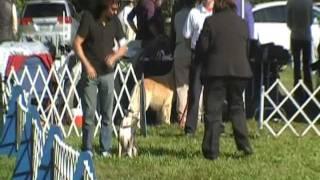Akc Rally Advanced B 2nd Place, Sammy The Rat Terrier | Instinct Dog Training