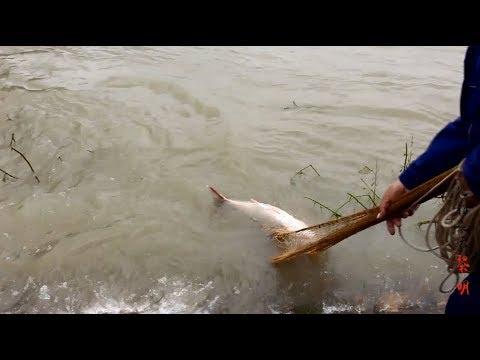 洪水比树还高,水里全是大货,撒桌面这么大,都能逮到大鱼!