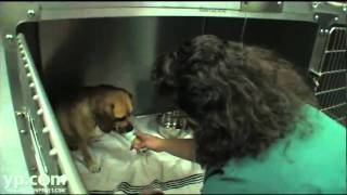 Fuerte Animal Hospital La Mesa CA Veterinary Clinic Pet