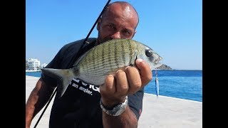 Micro Shore Jigging in the port! Various Catches! Feat ZENAQ Damper S90RG